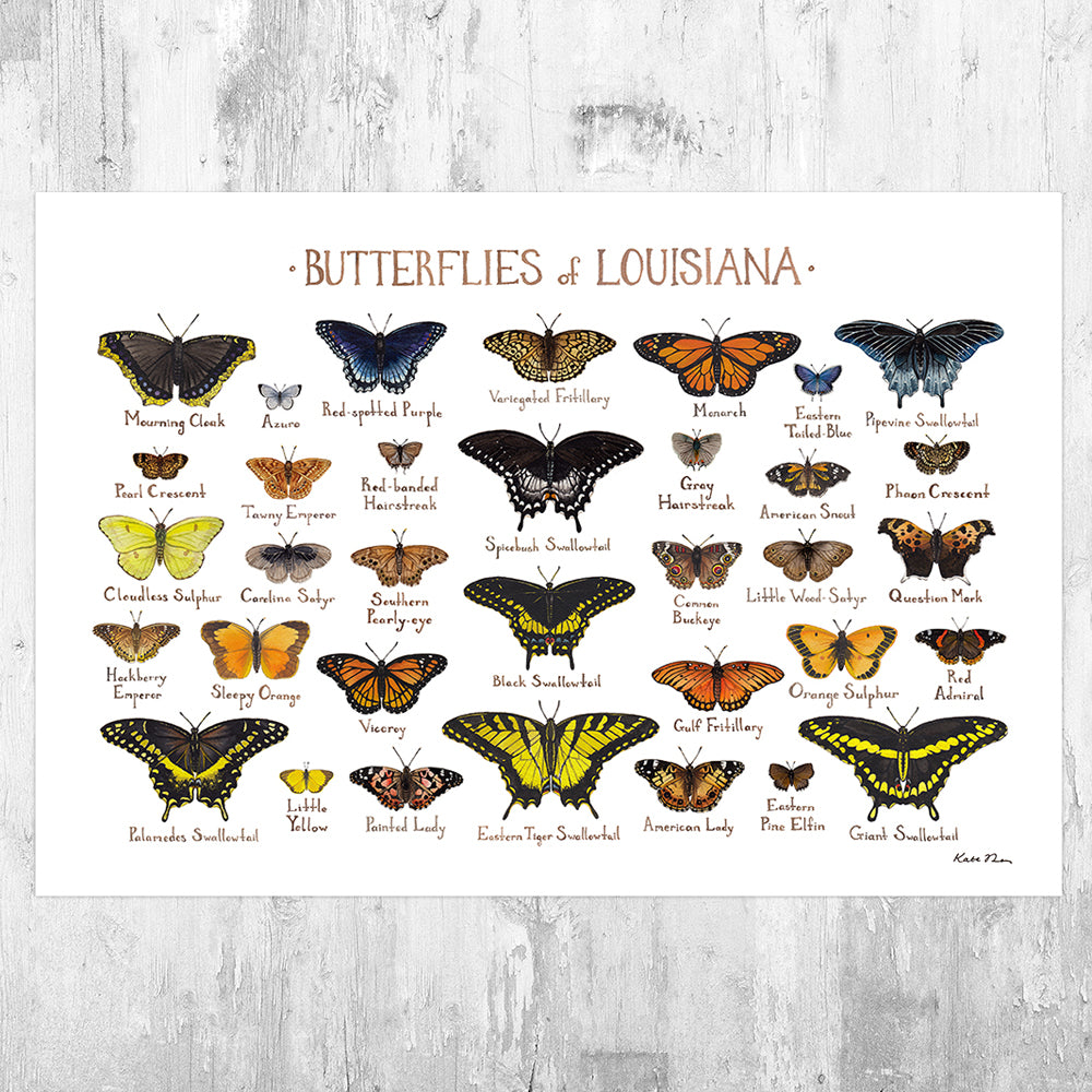 Louisiana Butterflies Field Guide Art Print
