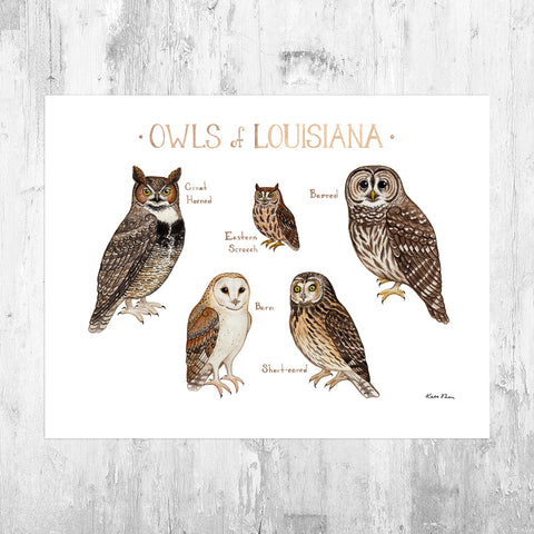 Wholesale Owls Field Guide Art Print: Louisiana
