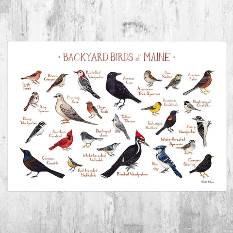 Maine Backyard Birds Field Guide Art Print