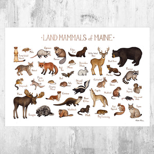 Maine Land Mammals Field Guide Art Print