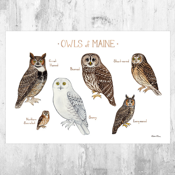 Maine Owls Field Guide Art Print