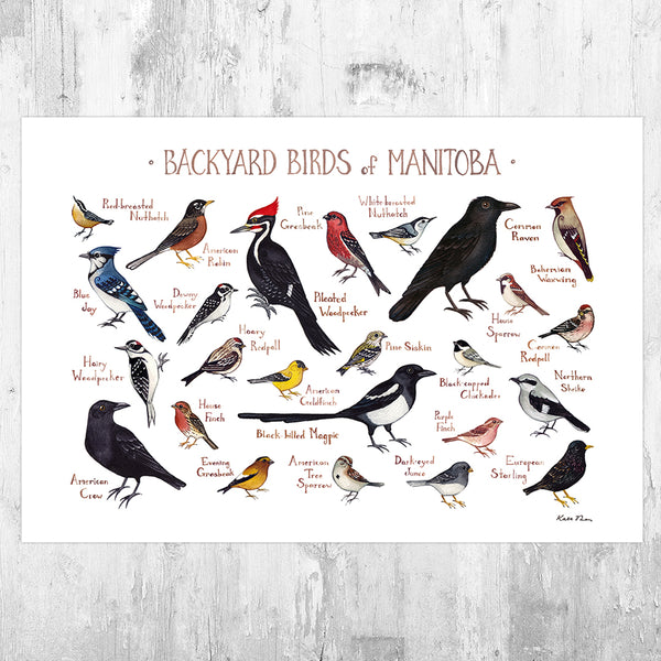 Manitoba Backyard Birds Field Guide Art Print