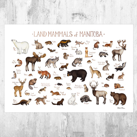 Manitoba Land Mammals Field Guide Art Print