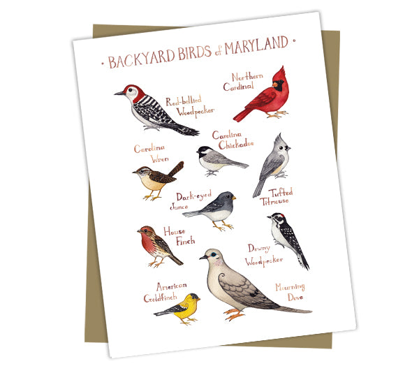 Wholesale Backyard Birds Field Guide Cards: Maryland