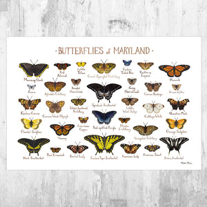 Maryland Butterflies Field Guide Art Print