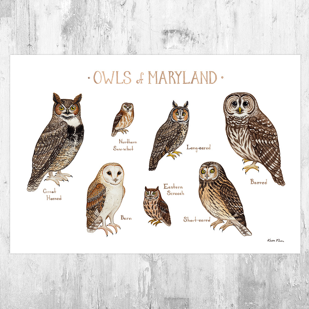 Maryland Owls Field Guide Art Print