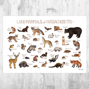 Massachusetts Land Mammals Field Guide Art Print
