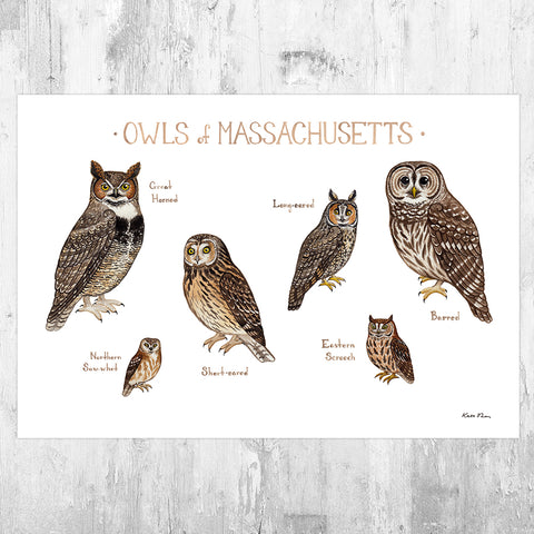 Massachusetts Owls Field Guide Art Print
