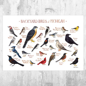 Michigan Backyard Birds Field Guide Art Print
