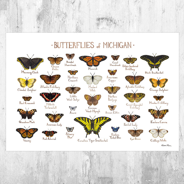 Michigan Butterflies Field Guide Art Print