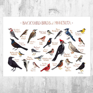 Minnesota Backyard Birds Field Guide Art Print
