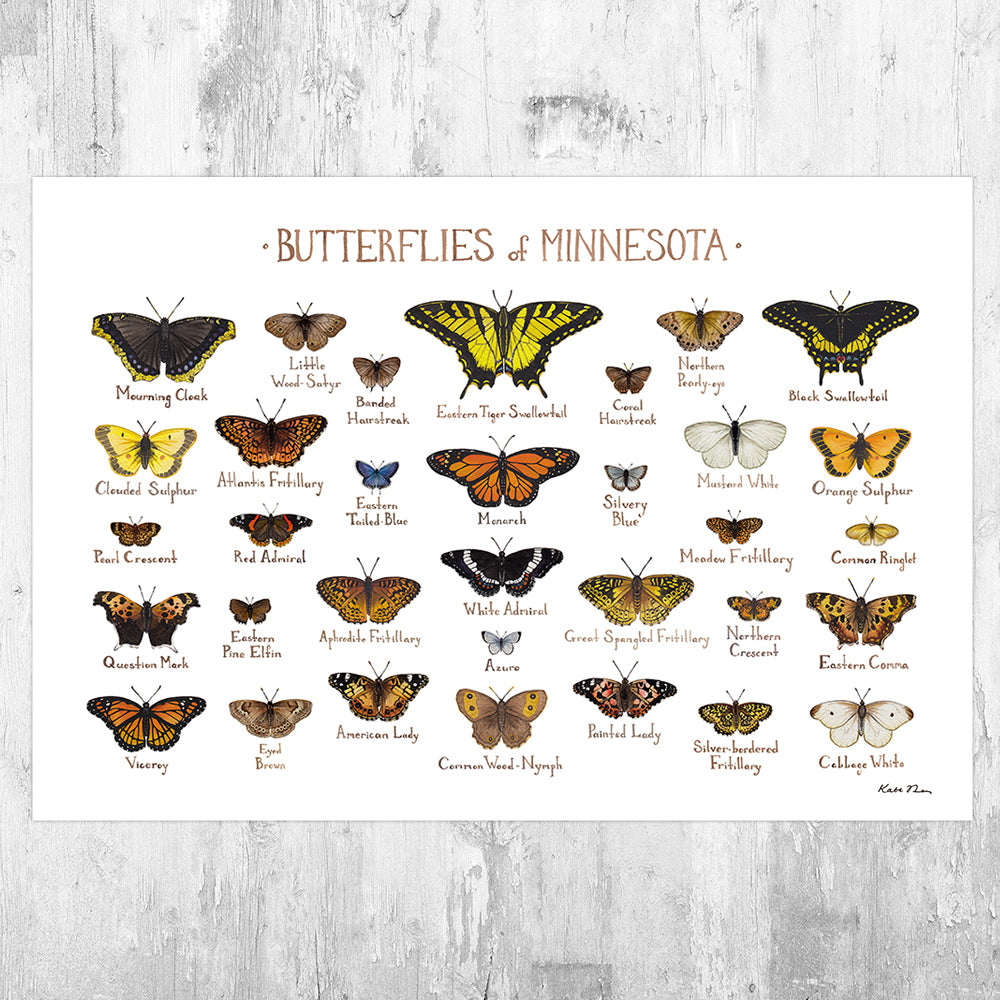 Minnesota Butterflies Field Guide Art Print