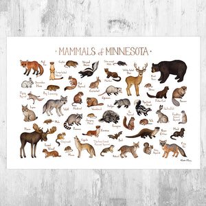 Minnesota Mammals Field Guide Art Print
