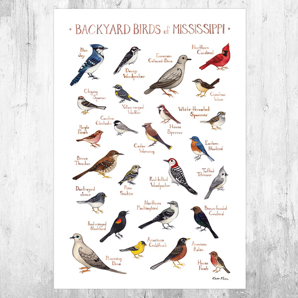 Mississippi Backyard Birds Field Guide Art Print