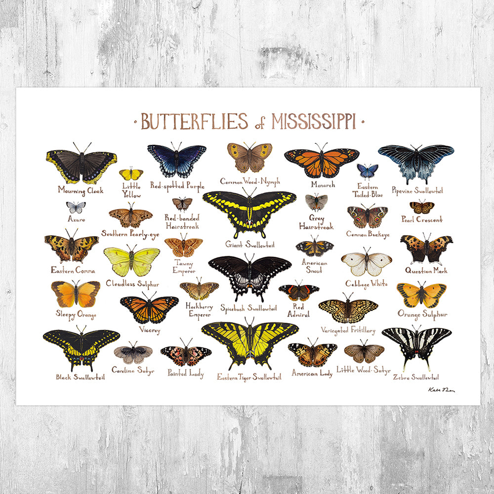 Mississippi Butterflies Field Guide Art Print