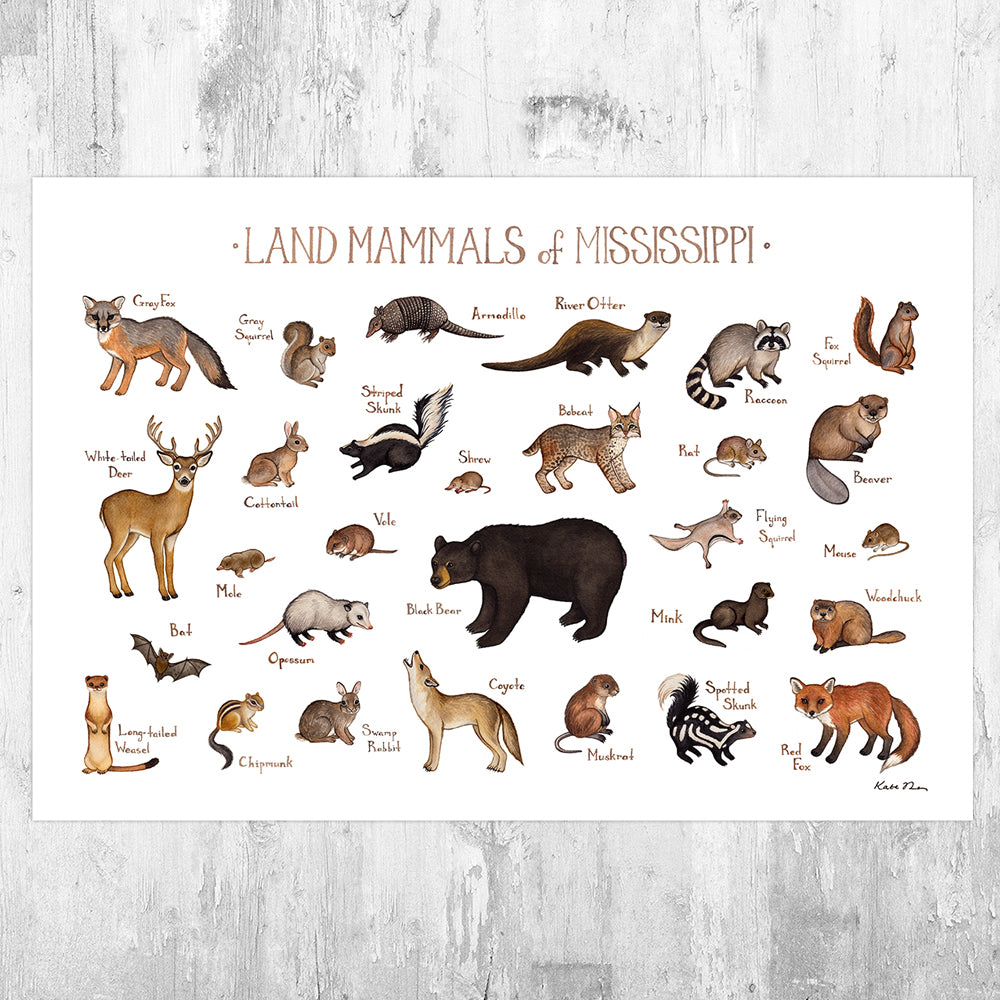 Mississippi Land Mammals Field Guide Art Print