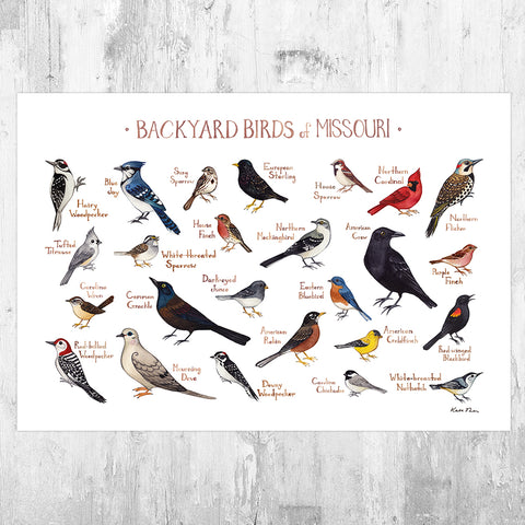 Missouri Backyard Birds Field Guide Art Print