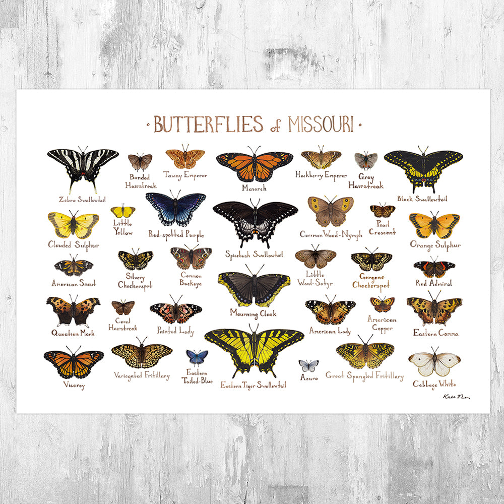 Missouri Butterflies Field Guide Art Print