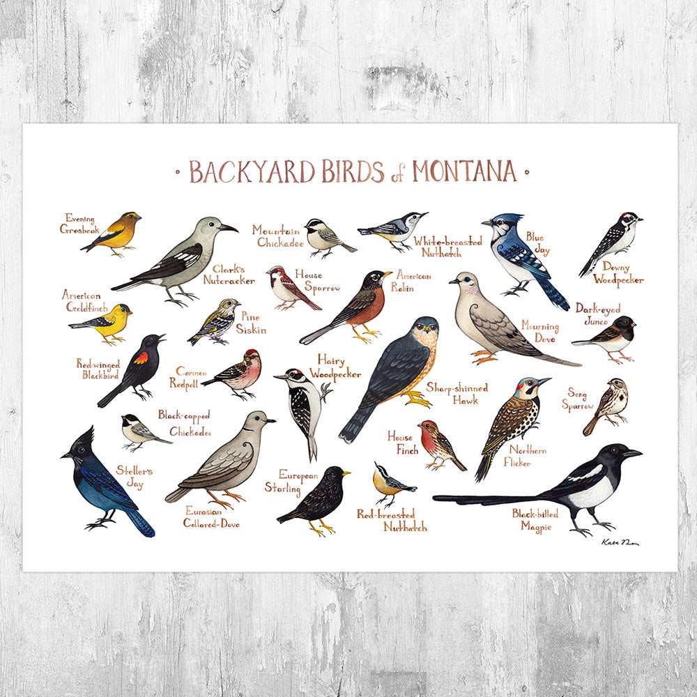 Montana Backyard Birds Field Guide Art Print