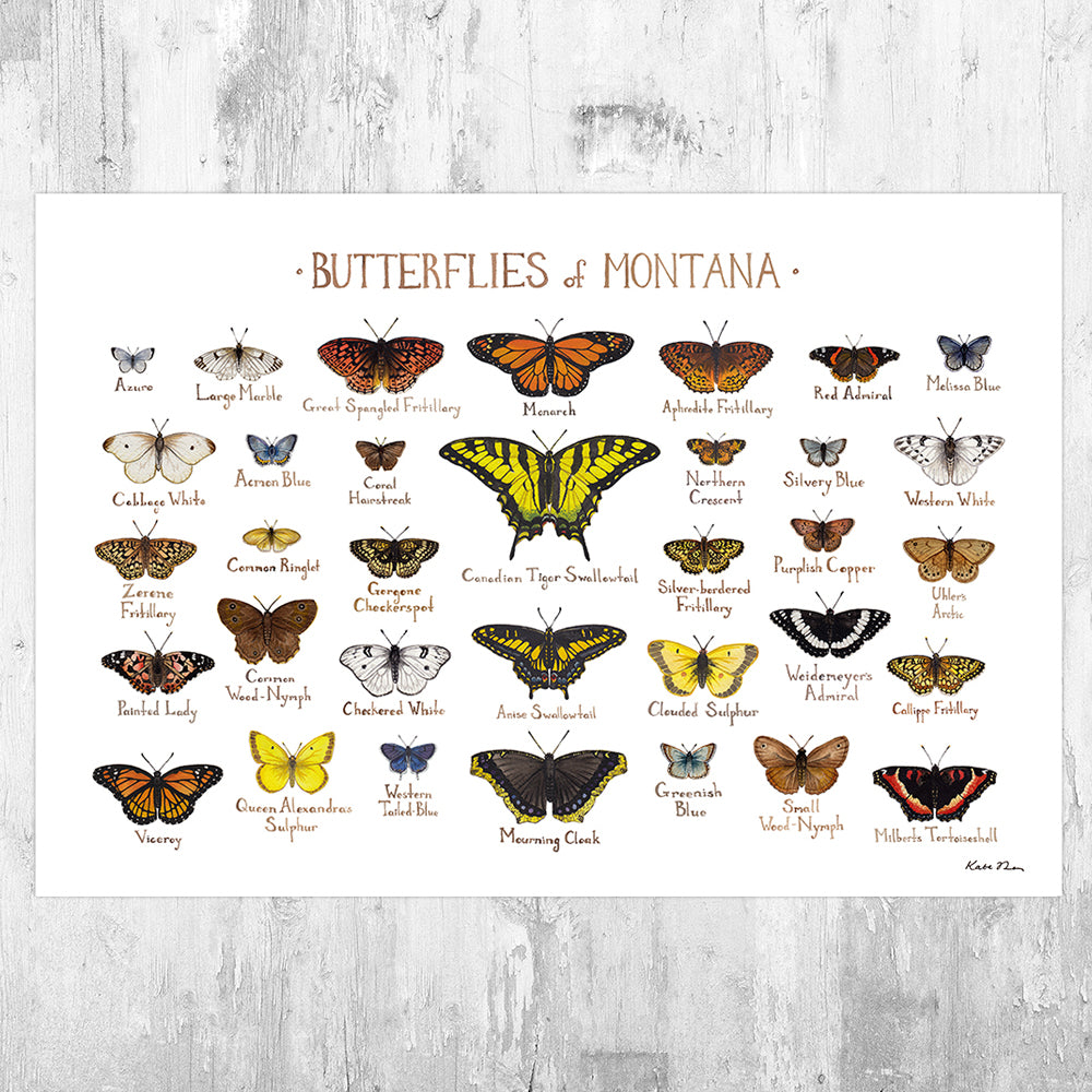 Montana Butterflies Field Guide Art Print