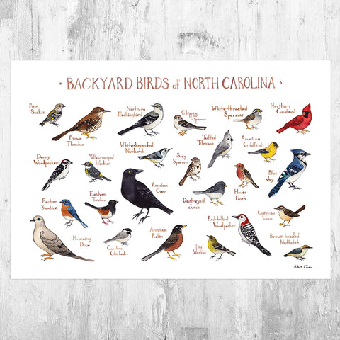 North Carolina Backyard Birds Field Guide Art Print