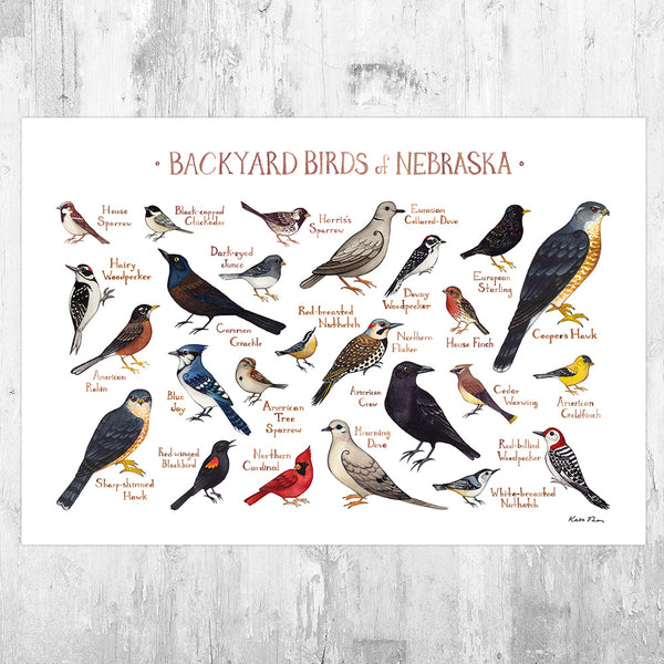 Nebraska Backyard Birds Field Guide Art Print