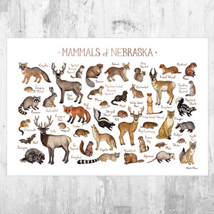 Nebraska Mammals Field Guide Art Print