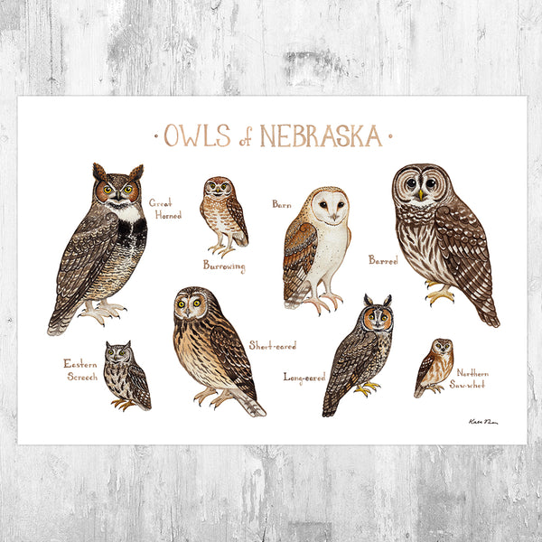 Nebraska Owls Field Guide Art Print