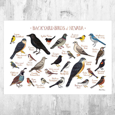 Nevada Backyard Birds Field Guide Art Print