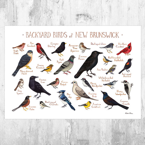 New Brunswick Backyard Birds Field Guide Art Print