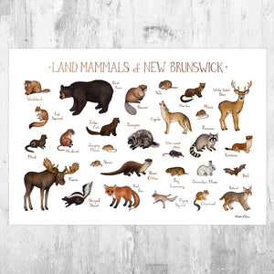New Brunswick Land Mammals Field Guide Art Print