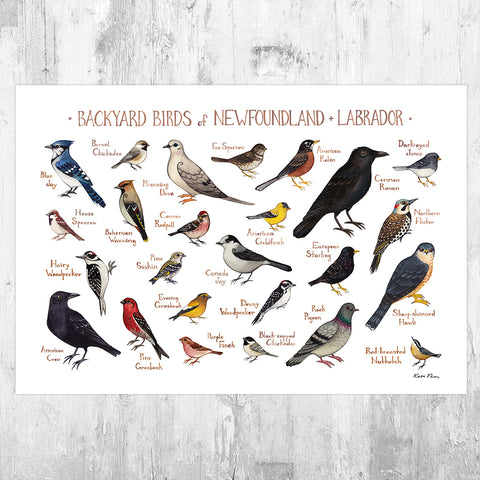 Newfoundland & Labrador Backyard Birds Field Guide Art Print
