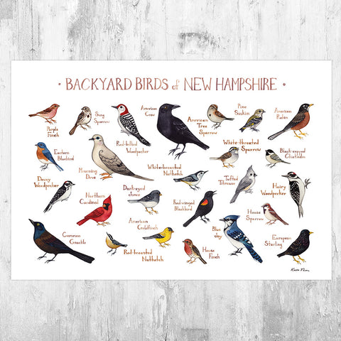 New Hampshire Backyard Birds Field Guide Art Print