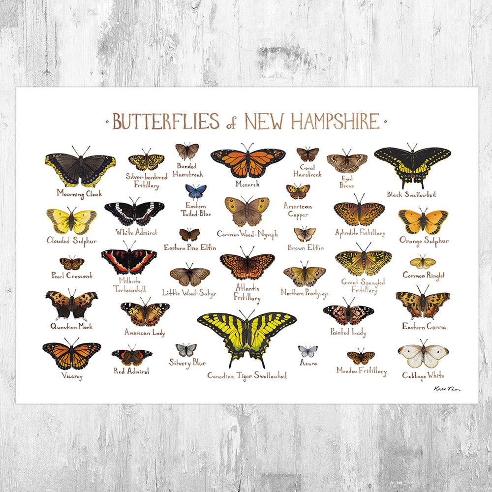 New Hampshire Butterflies Field Guide Art Print