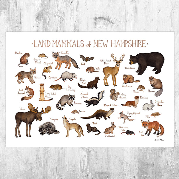 New Hampshire Land Mammals Field Guide Art Print
