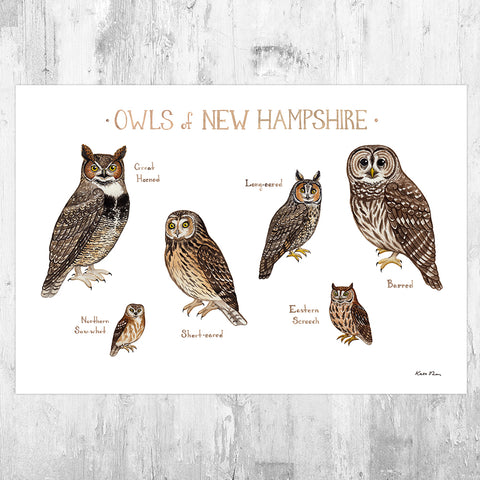 New Hampshire Owls Field Guide Art Print