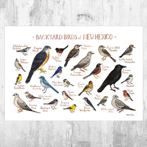 New Mexico Backyard Birds Field Guide Art Print