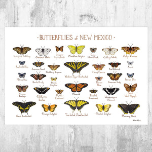 New Mexico Butterflies Field Guide Art Print