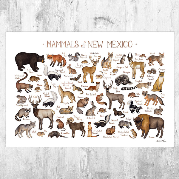New Mexico Mammals Field Guide Art Print