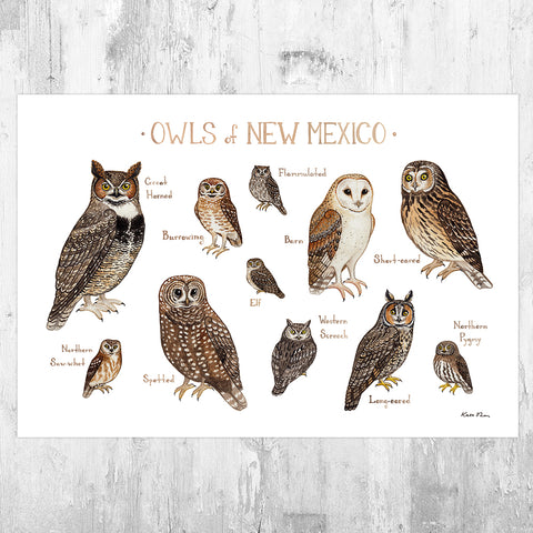 New Mexico Owls Field Guide Art Print