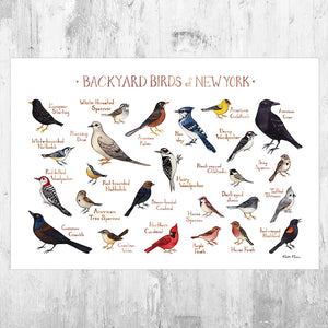 New York Backyard Birds Field Guide Art Print