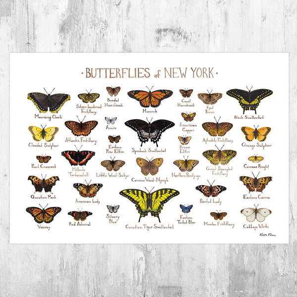 New York Butterflies Field Guide Art Print