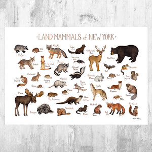 New York Land Mammals Field Guide Art Print