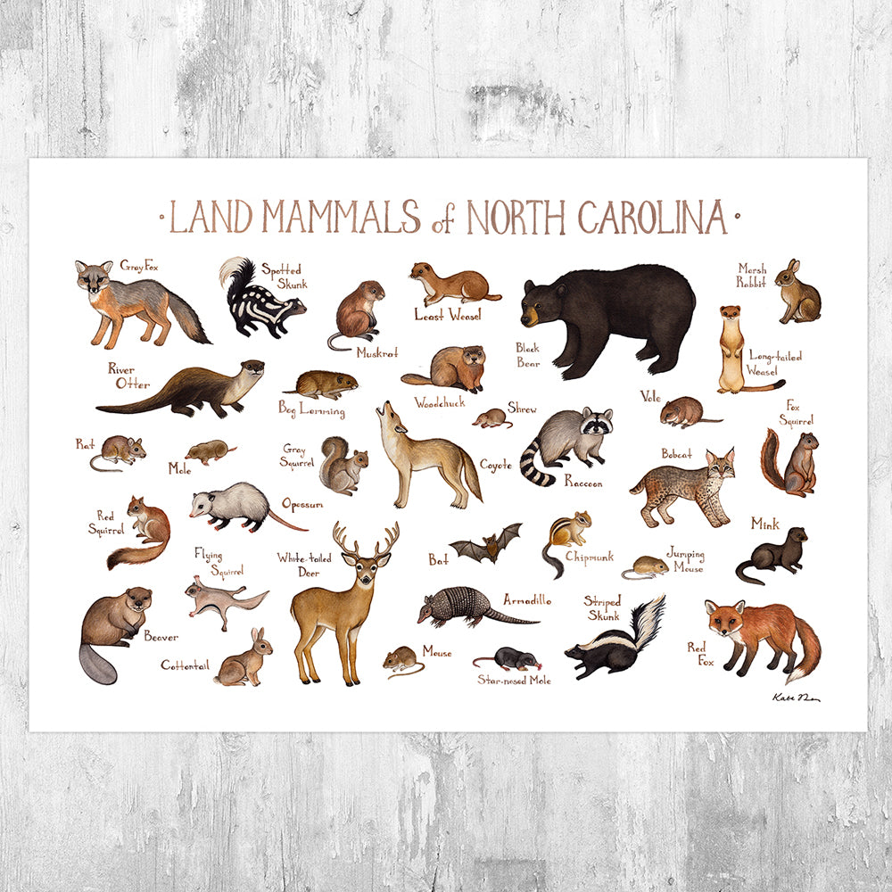 North Carolina Land Mammals Field Guide Art Print