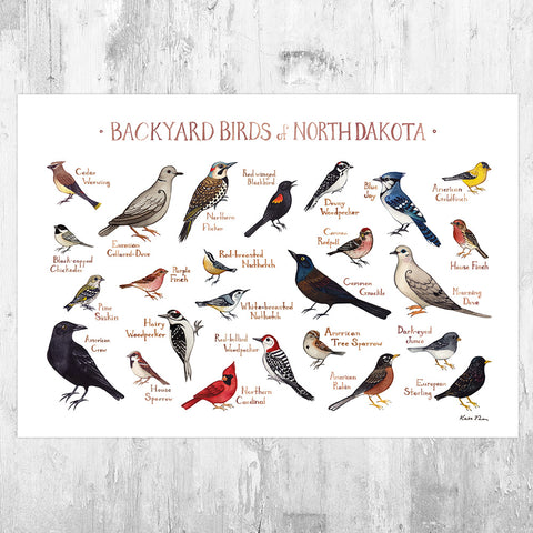 North Dakota Backyard Birds Field Guide Art Print