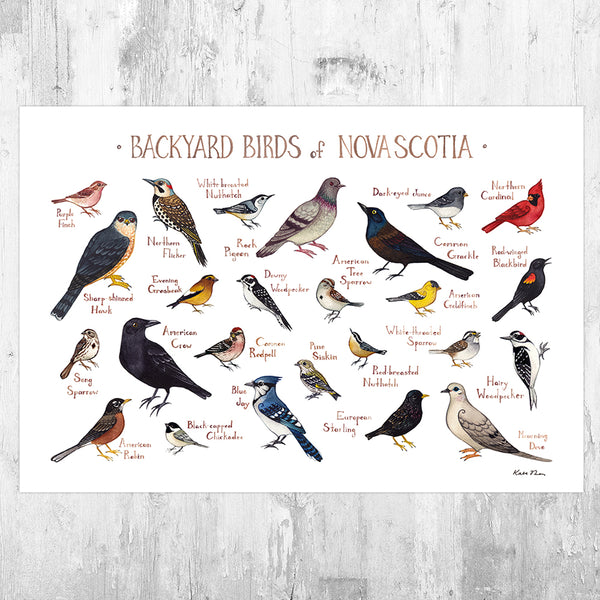 Nova Scotia Backyard Birds Field Guide Art Print
