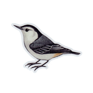 White-breasted Nuthatch Vinyl Sticker