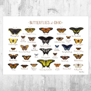 Ohio Butterflies Field Guide Art Print