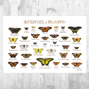 Oklahoma Butterflies Field Guide Art Print