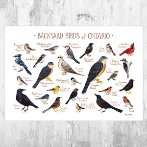 Ontario Backyard Birds Field Guide Art Print